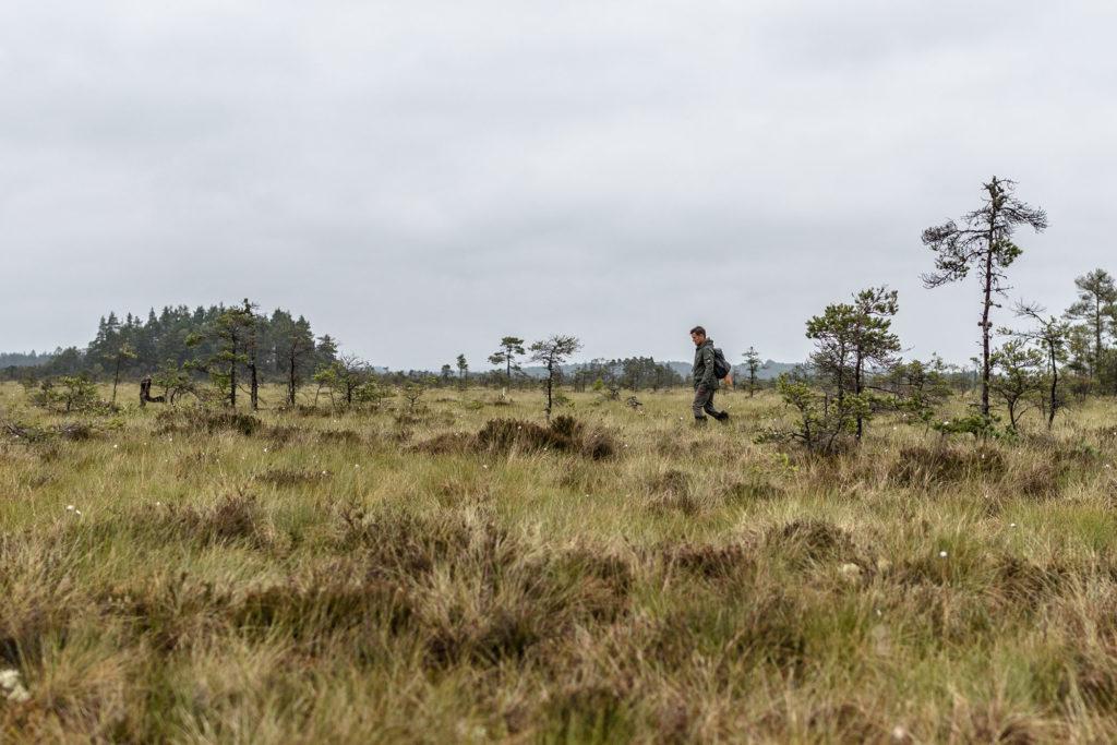 Man vandrar över Store Mosse Nationalpark i Småland