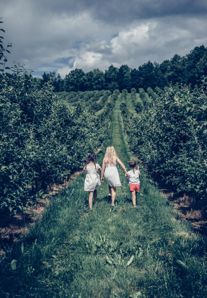 Barn går i Rudenstams äppelodling utanför Jönköping i Småland