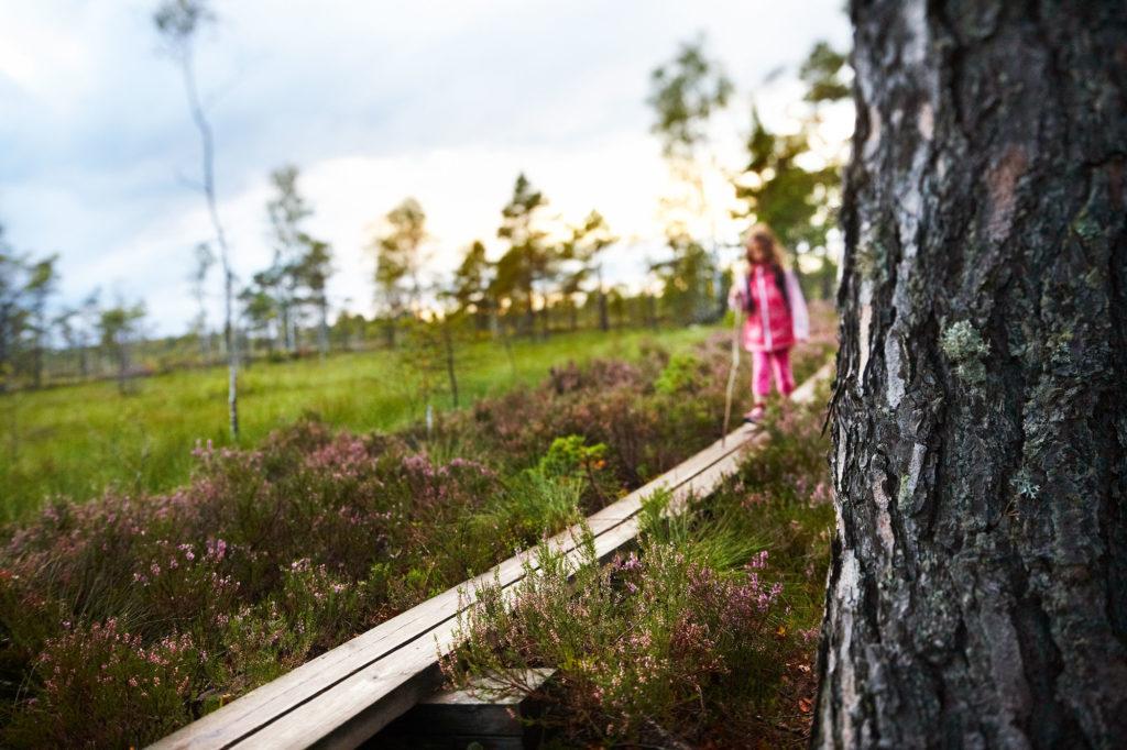 Flicka i rosa kläder går på spång över Store Mosse i Småland