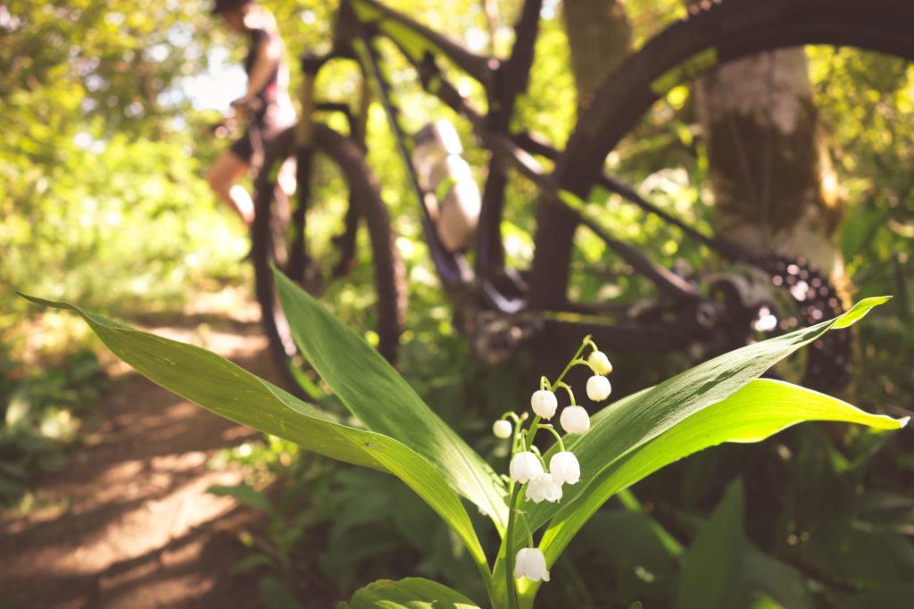 Grönskande blommor vid IKHP-stugan i Huskvarna